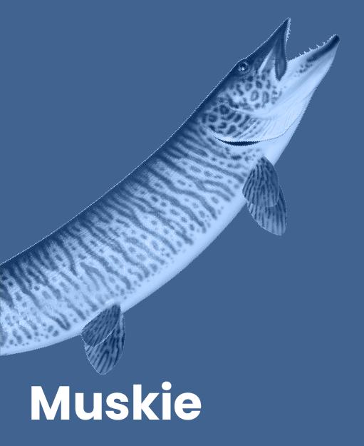 Muskie