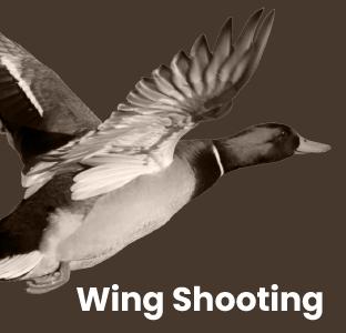 Wing Shooting